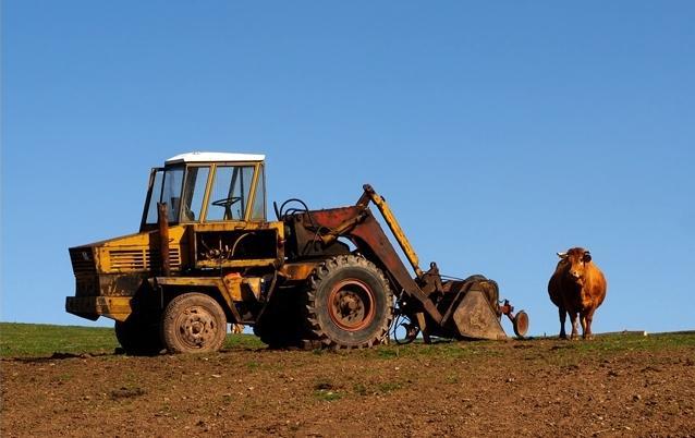 Ku og traktor